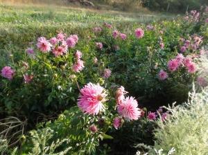 Coltiviamo anche fiori per passione!